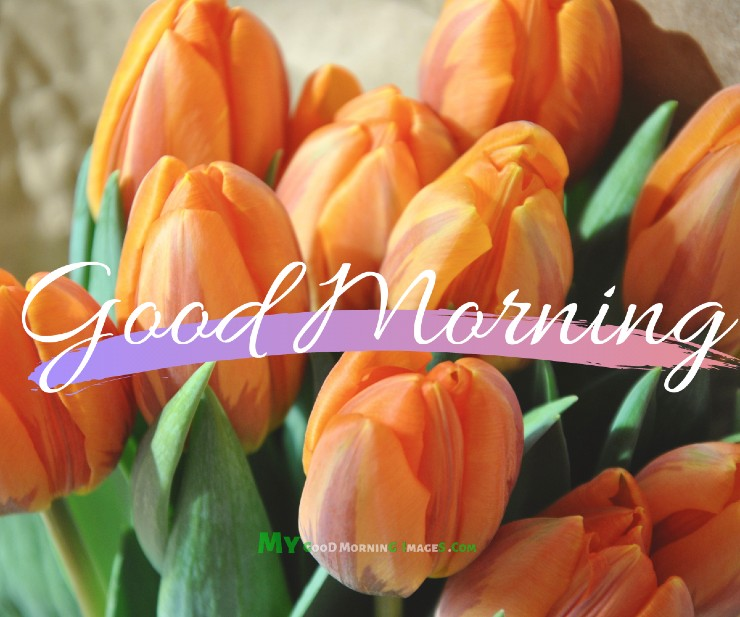 Good Morning Flowers With Messages