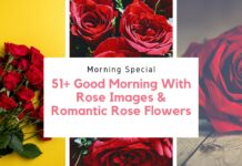 51+ Good Morning With Rose Images & Romantic Rose Flowers