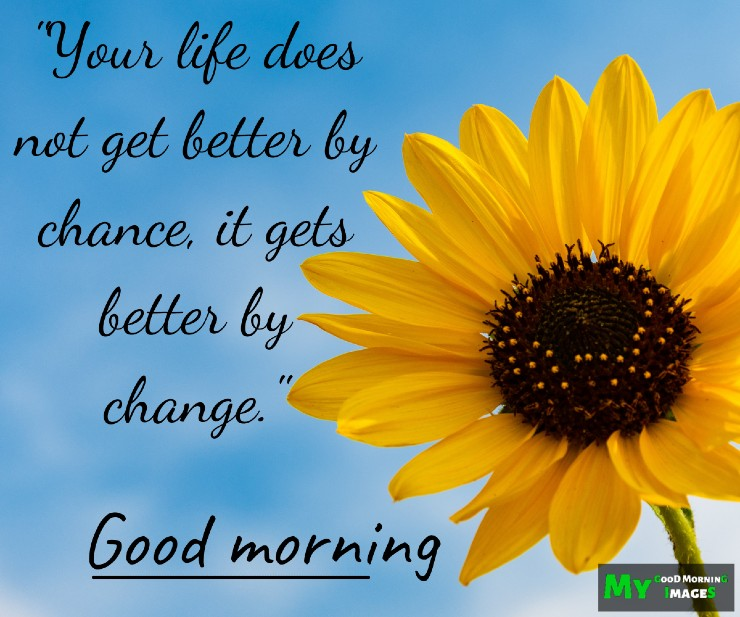 Good Morning Images For WhatsApp Free Download With Flowers