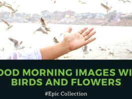 51+ Good Morning Images With Birds And Flowers, GM Bird Images