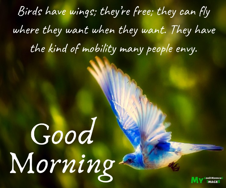 Good Morning Birds Images With Quotes