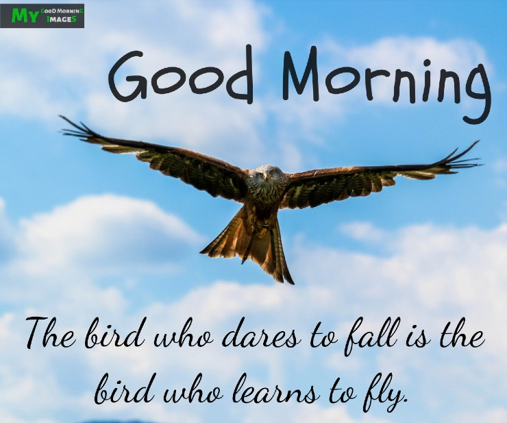 Good Morning Images With Birds And Flowers