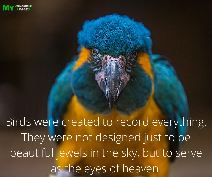Good Morning Parrot Images With Quotes